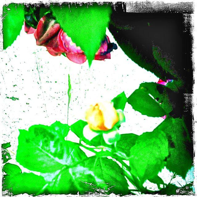 mein-hipstaprint-9732566454