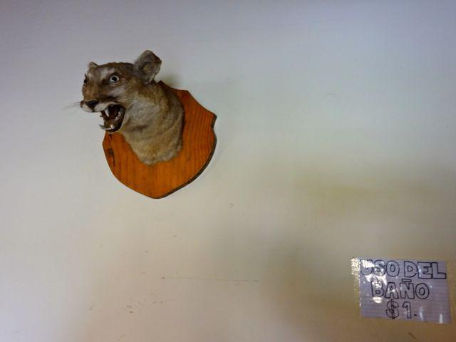 Der stolze Puma