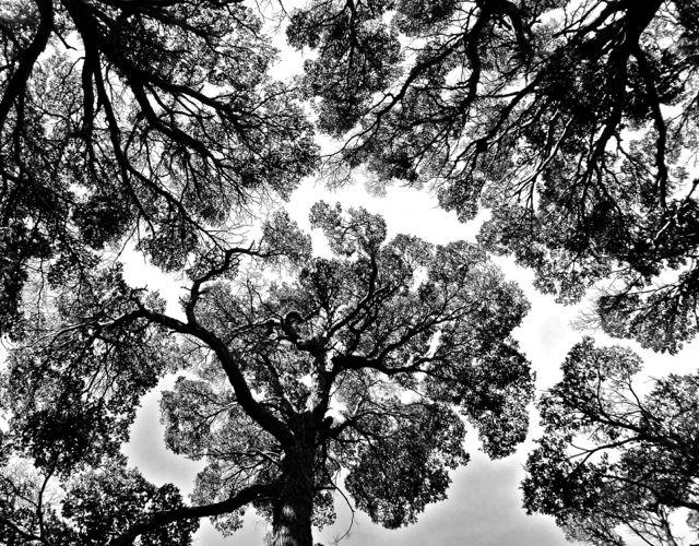Wald in Feuerland