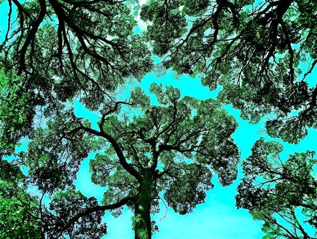 Wald in feuerland türkis