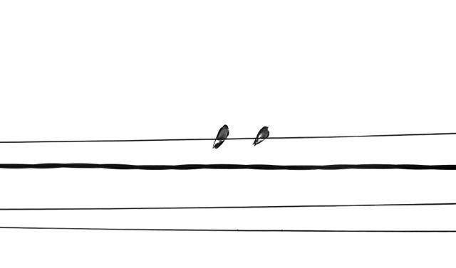 Musikalische Vögel
